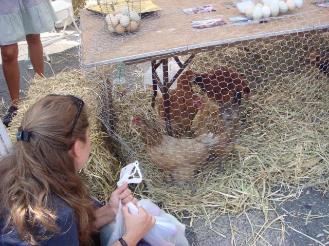 20070908-union-square-05-bronx-group-chickens.jpg