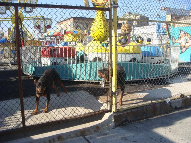 20071228-coney-island-07-guard-dogs.jpg