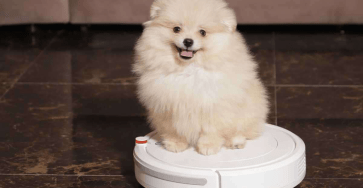 3 tips to keep your interior clean when you have a pet 8