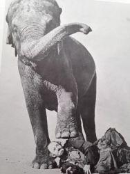 Emmett Kelly Sr. and an elephant friend