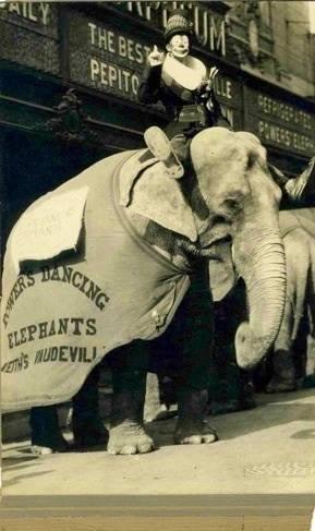 Pepito Perez and elephant