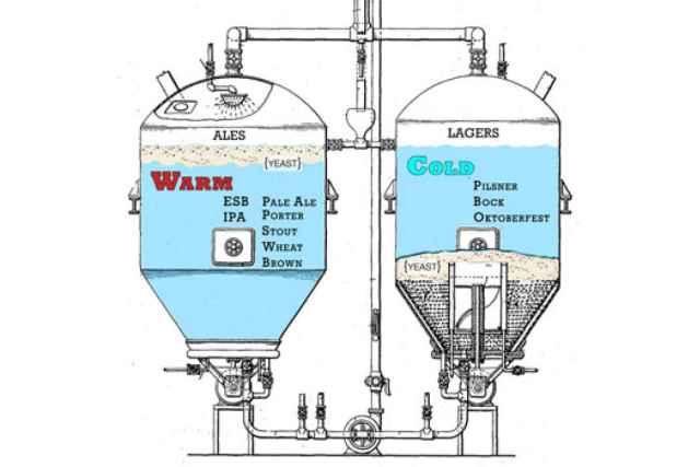 Top versus Bottom fermentation