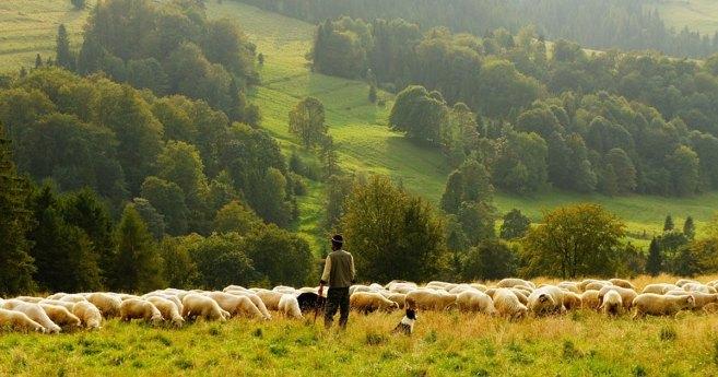 Near-sighted Shepherds