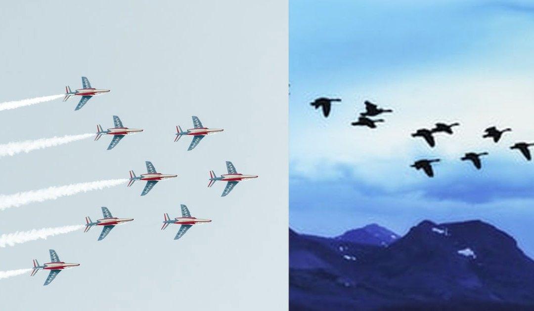 Gansos voladores, pilotos de caza y ministerio