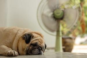 ventilateur chien