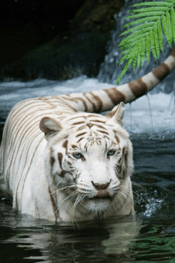 20 Magnificent Animal Wallpapers For IPhone