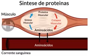 Aminoácido, O que são, Para que Serve