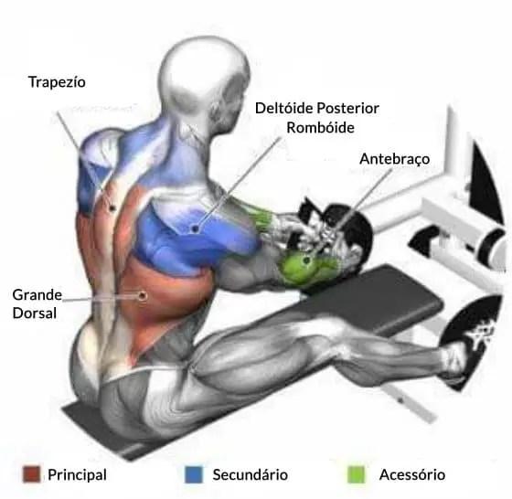 exercícios para as costas - Remada Sentada na Polia