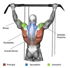 Exercícios para costas - Barra Fixa