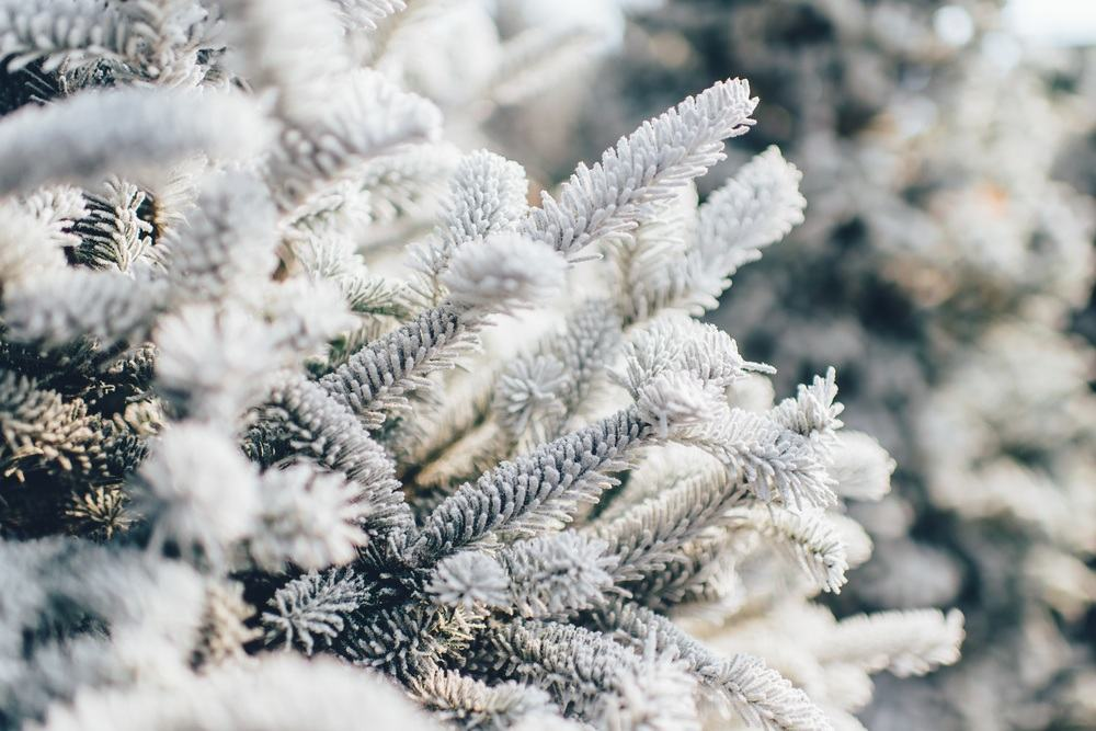 Winter-49