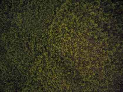 jev-lueyjoe-ozark-drones