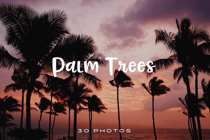 Palm Trees Photo Pack
