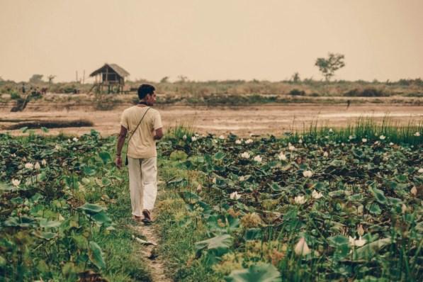Farm-Fields