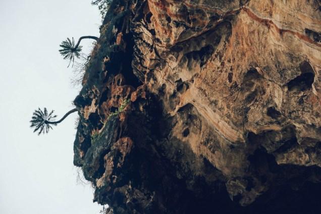 Goofy-Palm-Trees