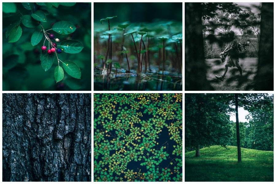9-Holes-Golf-Photo-Pack-45-Photos-Nature