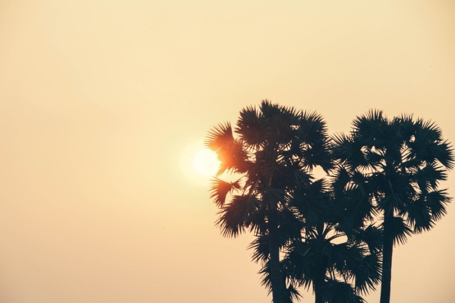 Beautiful-Sunset-in-Cambodia-Photographed-behind-Palm-Trees