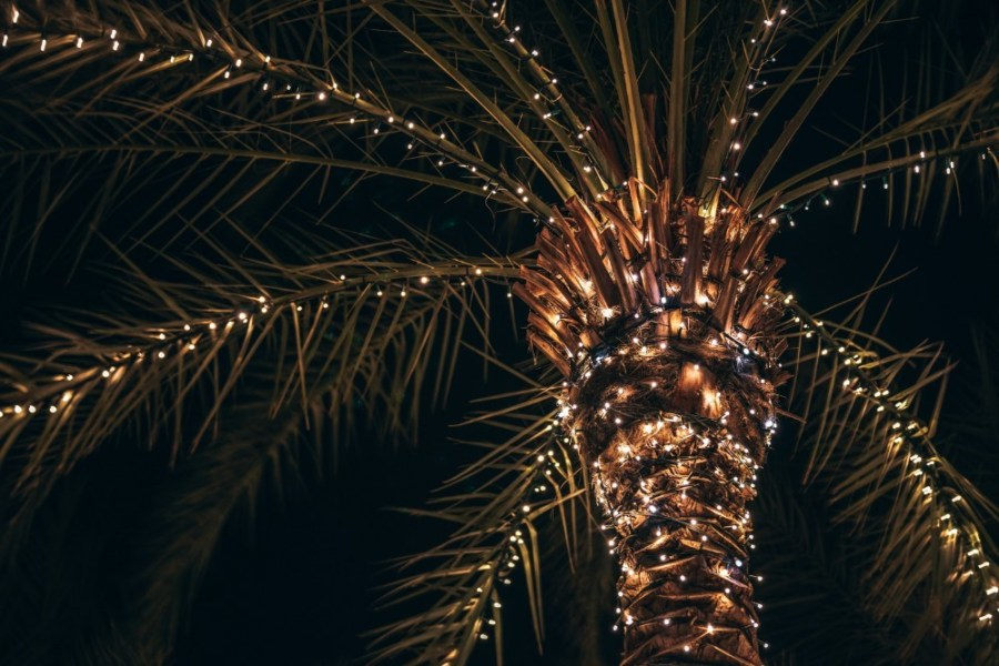 Palm-Tree-with-many-Lights-on-the-Tree-and-the-Leaves