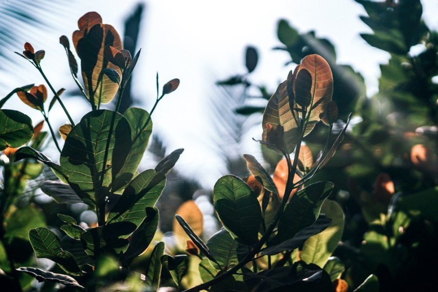Stunning-Green-and-Orange-Tropical-Leaves-Translucent-in-the-Sun