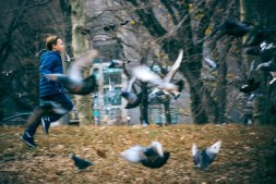 Awesome-Shot-of-a-Kid-Chasing-Pigeons-in-the-Park