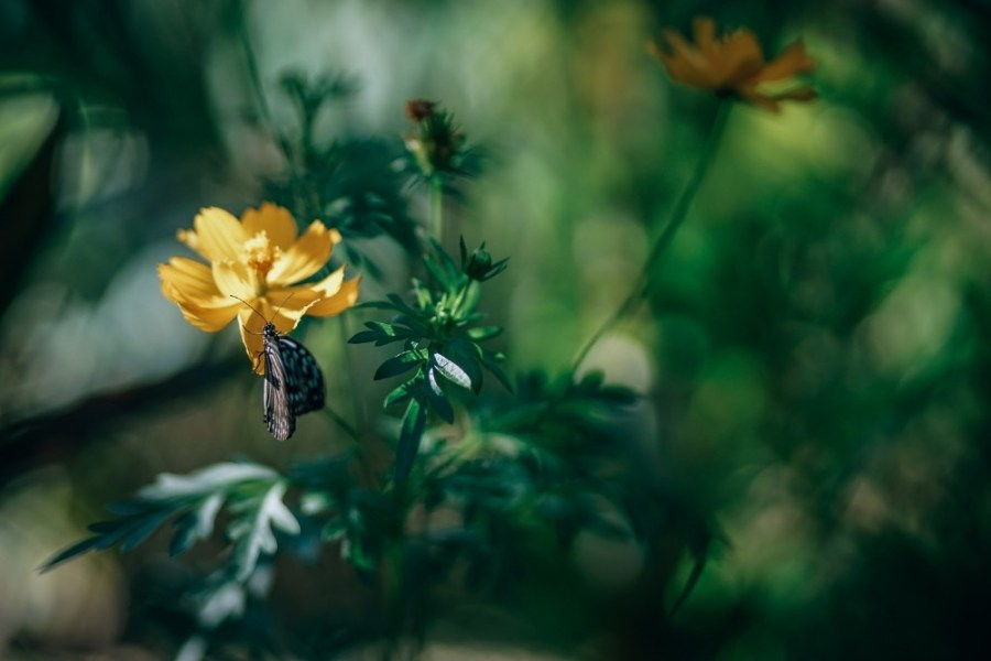 Brown-Butterfly-Sitting-on-a-Yellow-Flower