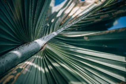 Close-up-Shot-of-a-Green-Palm-Tree-Branch-at-a-Beach-in-Thailand