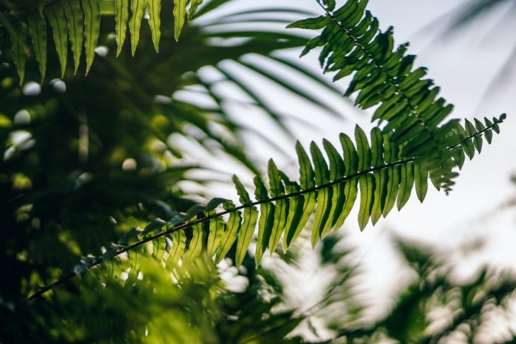 Lush-Tropical-Plant-at-Sunset