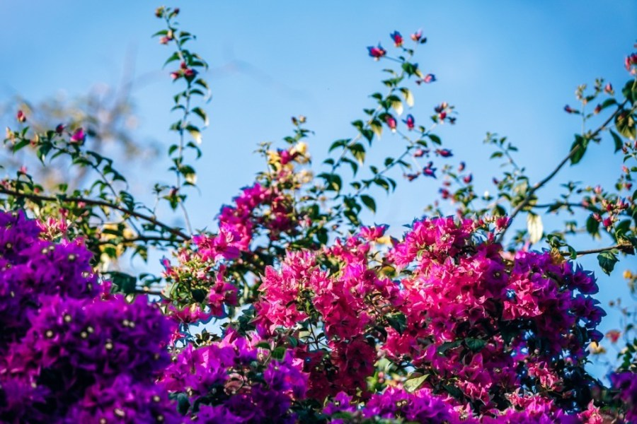Beautiful-Pink-Flowers-in-the-Sunlight
