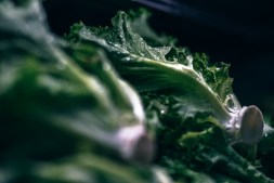 Close-up-Shot-of-Fresh-Organic-Lettuce