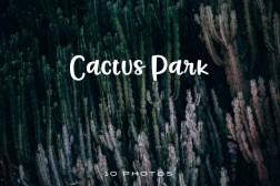 Cactus-park