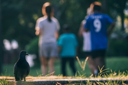 Pigeon-Standing-on-the-Ground-with-People-Walking-in-the-Background