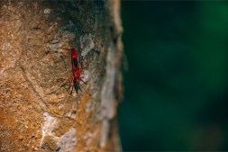 Red-Insect-Walking-Down-a-Tree