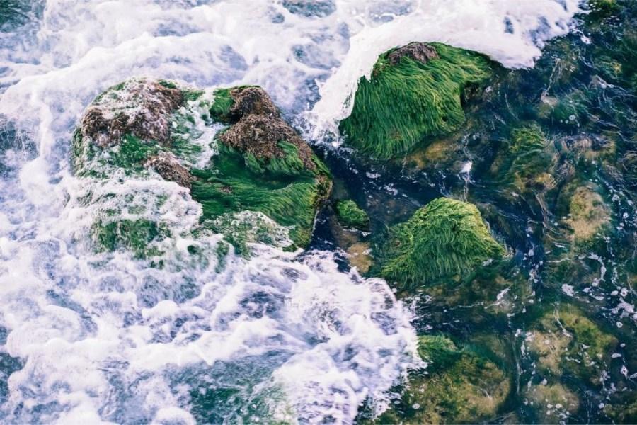Sea-Waves-Flowing-Over-Mossy-Rocks