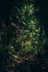 Tropical-Plants-Photographed-in-Low-Light