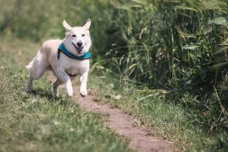 How To Make Your Garden Safe For Your Pets