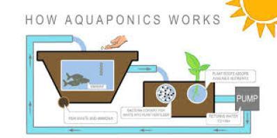 hydroponis vs aquaponics