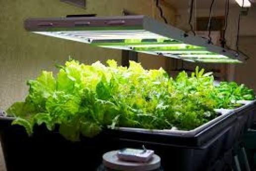 indoor best grow lights