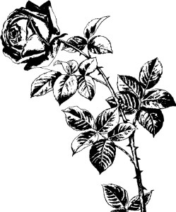 A line drawing of a rose on a stem with petals