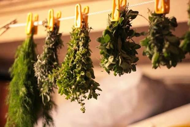 Secado habitual plantas medicinales