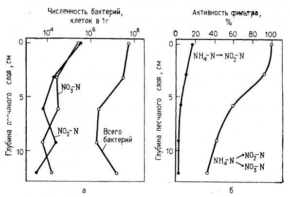 Концентрация и активность нитрифицирующих бактерий на разной глубине фильтра в морском аквариуме