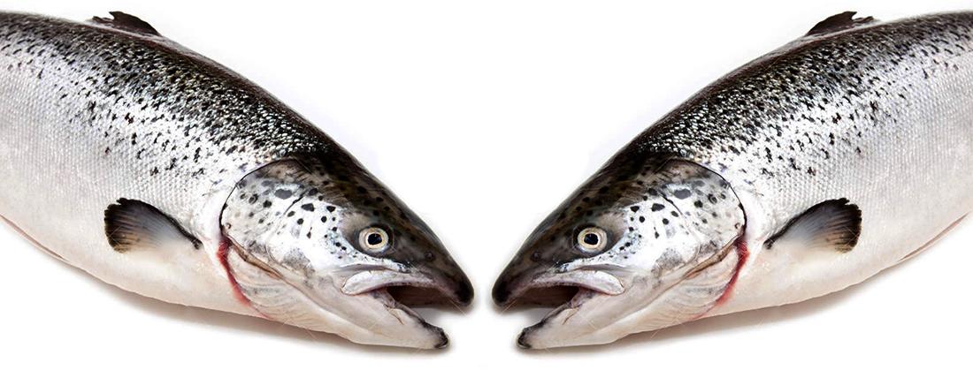 bastoes salmon img destacada
