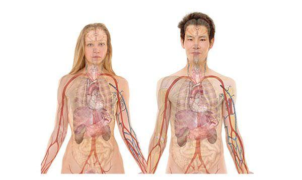 自律神經系統是什麼?
