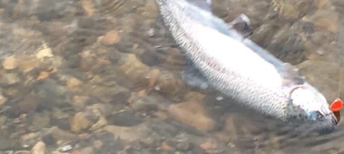 Kendt lystfisker fik en overraskelse søndag formiddag