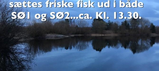 Friske fisk ud i begge søer i dag