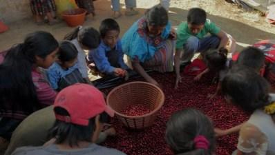 Family Sorting Beans