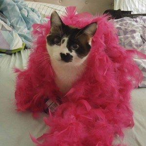 Cat dressed up in a pink boa