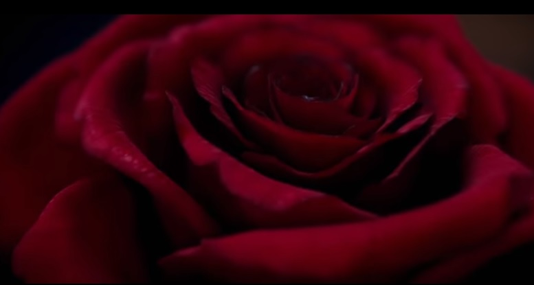 Disney's Live- action Beauty and the beast rose
