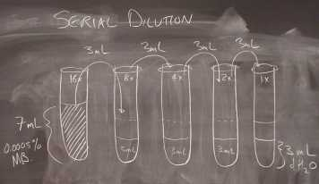 Here is the experimental plan to perform a serial dilution