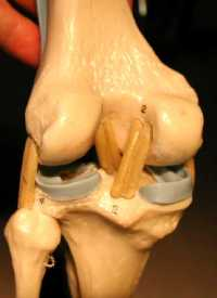 knee, extended posterior view