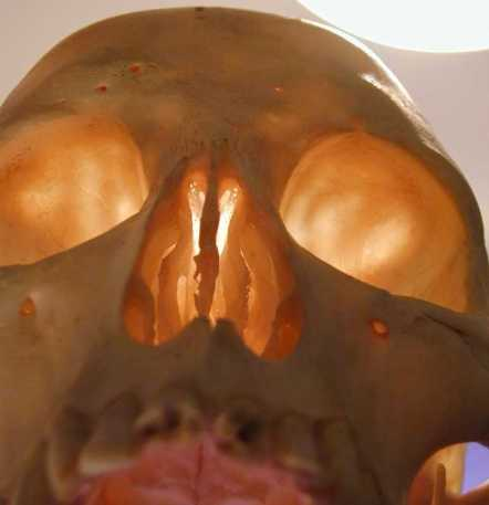 01_up_the_nose_PA281071