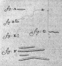 Leeuwenhoek bacteria 1683